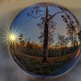 Sunset Ball by Rob Crutcher  - Artistic Objects Glass ( tree, nature, sun burst, sunset, glass ball, sunstar )