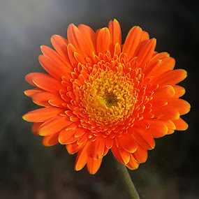 Bungaku by Cevi Permana - Nature Up Close Flowers - 2011-2013