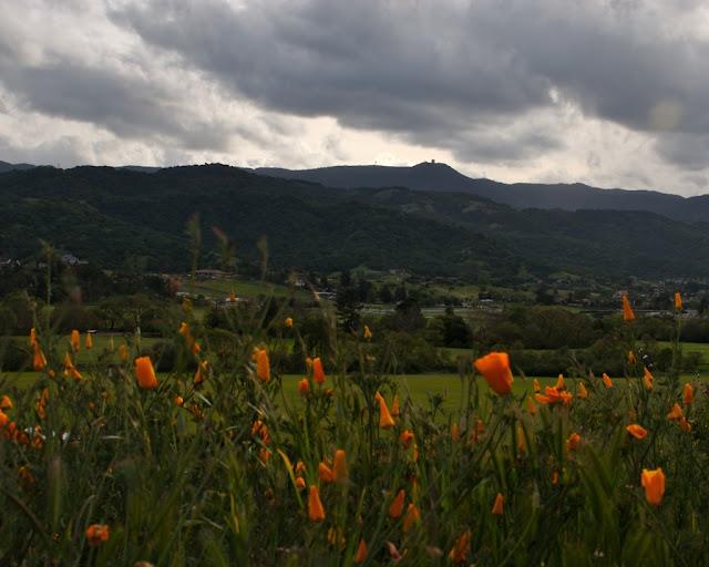 Fortini Wildflowers