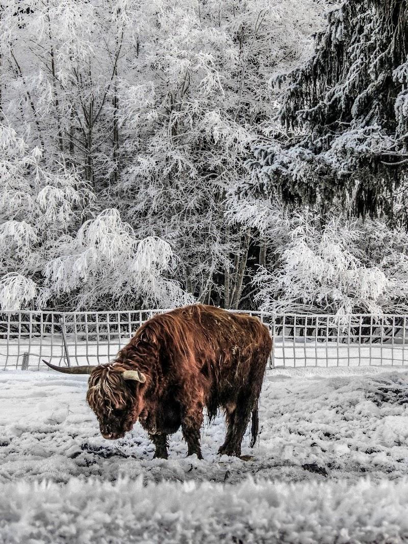 Highlander, il toro immortale di alfonso gagliardi