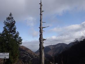 この木もいつなくなるか