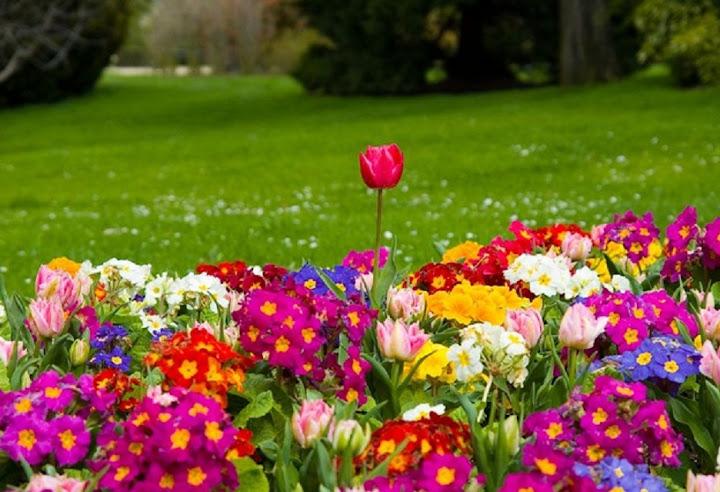 """Spring Season"" Wallpaper Collection For Your Desktop | Gizmocrazed - Future Technology News - photo#27"