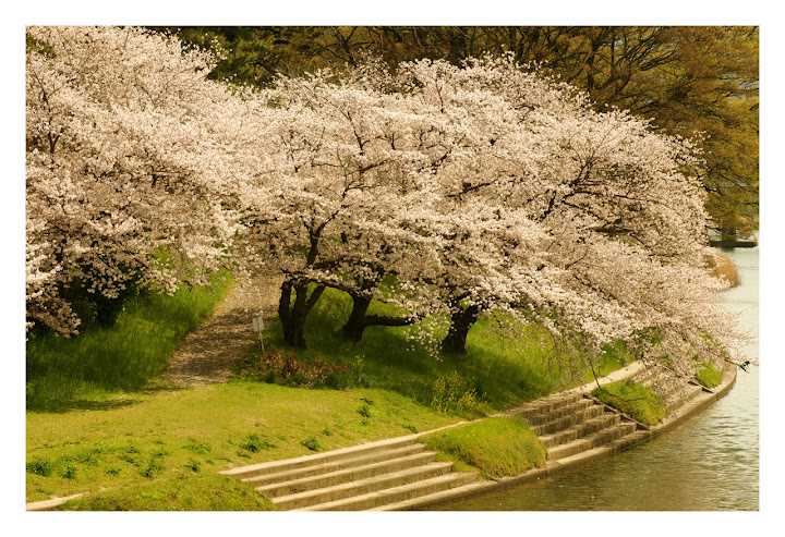 """""""Spring Season"""" Wallpaper Collection For Your Desktop"""