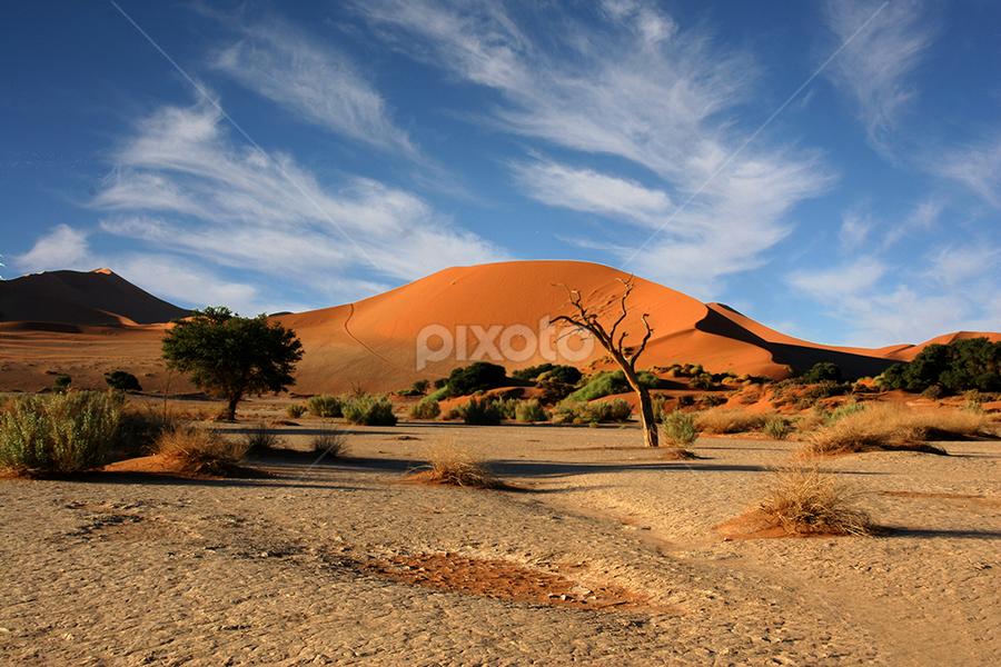 Near Sososvlei,Namibia by Mel Dicker - Landscapes Deserts