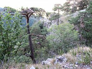 Photo: 21.Powyżej szlak się nieco wypłaszcza, ale niech was to nie zmyli - do szczytu Tlstej jest jeszcze ho ho jak daleko.