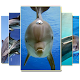 Dolphin Wallpaper Download for PC Windows 10/8/7