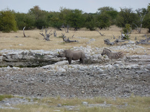 Photo: Etoschapark, Nashorn und Zebra