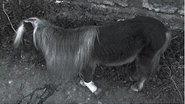 Poni localizado por la Policía Nacional amarrado en una rambla de Almería.