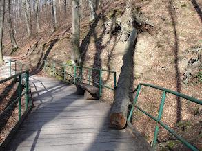 Photo: dobro da je most izdržao ovo drvo ...