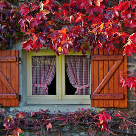 Autumn is highly wellcomed by Ciprian Apetrei - Buildings & Architecture Architectural Detail ( window, autumn, brittany, architecture, leaves )