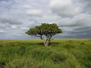 Photo: A Serengeti végtelen síkja