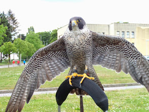 Photo: hij luisterde nogal ik zei vleugeltjes open en hij deed het nog ook