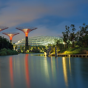 Garden By The Bay by Martin Yon - Landscapes Travel ( garden by the bay, garden, singapore )