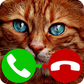 fake call cat