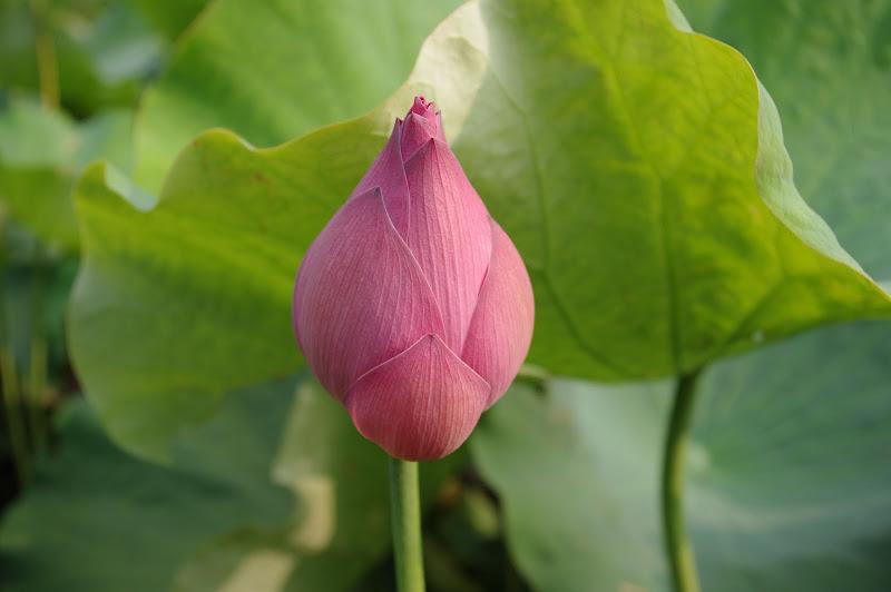 一朵花 一個故事