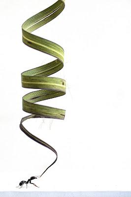 la spirale di fabio_sartori