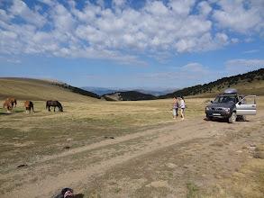 Photo: des chevaux en liberté !