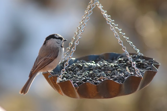 A Haven For Wildlife: Encouraging Birds And Animals Into Your Garden