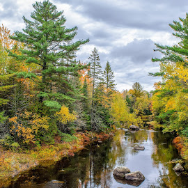 Cloudy Autumn day in Maine by Cait DiMaria - Landscapes Forests ( landscapes, fall leaves, fall colors, fall, nature, wilderness, autumn, river, landscape )