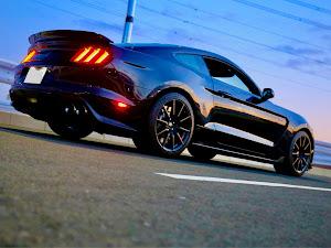 シェルビー GT350 のカスタム事例画像 Black Cobraさんの2020年02月01日18:28の投稿