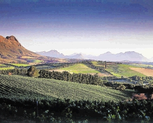 VINOUS: Picturesque, healthy-looking wine farms in the Western Cape hide the reality that many of their owners are battling to stay afloat