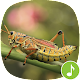Appp.io - Grasshopper sounds