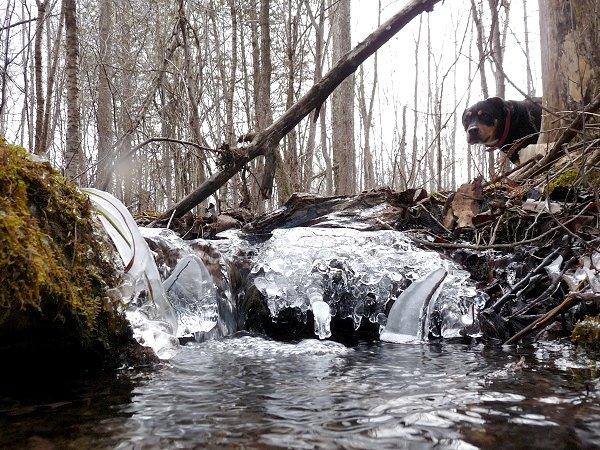 tiny icy waterfalls