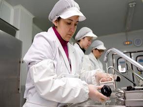 Photo: Manjares de la Tierra Facility: Selecting the best black truffle Tuber Melanosporum