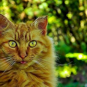 Duh.. by James Cole - Animals - Cats Portraits (  )