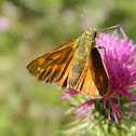The large skipper