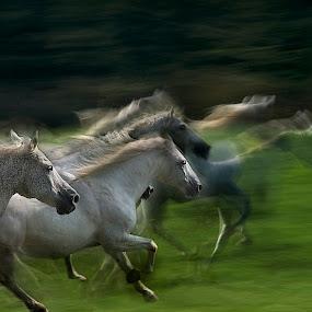 by Milan Malovrh - Animals Horses