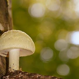 by Manuela Dedić - Nature Up Close Mushrooms & Fungi