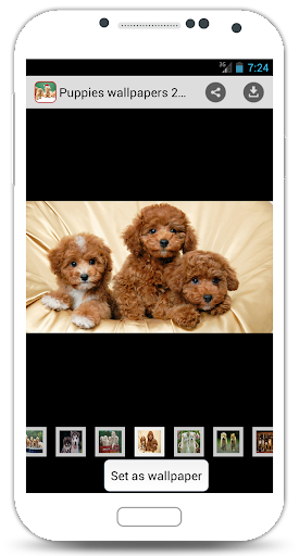 Puppies Wallpapers 2015