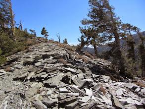 Photo: Dark gray flagstone covers the ground on the flank of Dawson Peak.