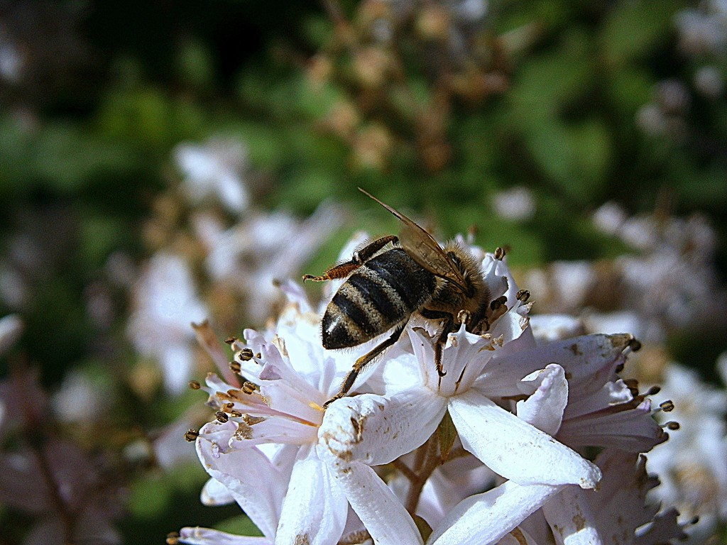 Kwiaty Przyjazne Pszczolom Zielony Ogrodek