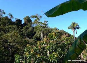 Photo: Jungle habitat at Singayta