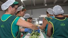 Trabajadoras de Unica Fresh manipulando judías.