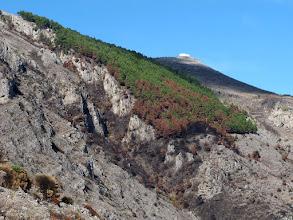 Photo: pineta di San Costanzo con cappella sullo sfono