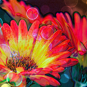 Richeous Rainbow Blooms.jpg