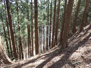 すぐ下に新しい林道