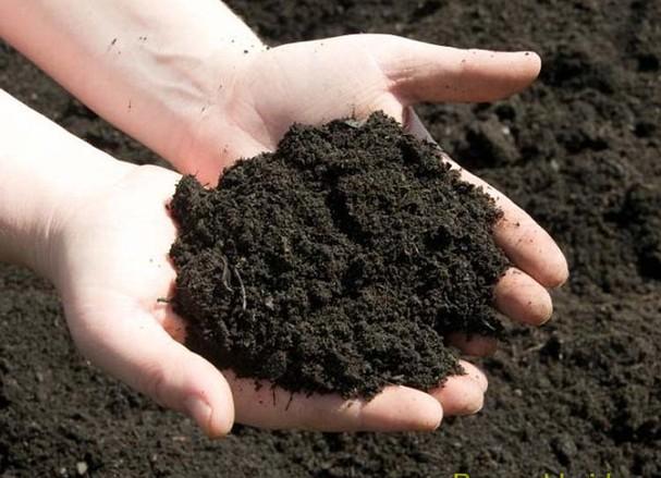 Đất sạch