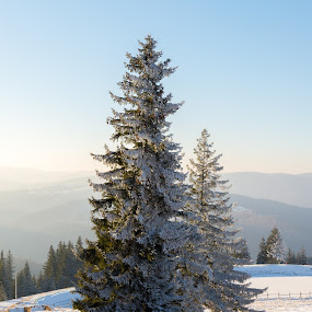 New Year's Snow by Andreea Alexe - Landscapes Mountains & Hills ( mountain, cold, snow,  )