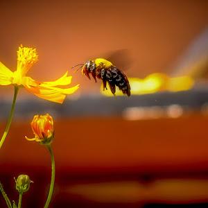 D3_RIPAN DAM_I Love Honey.jpg