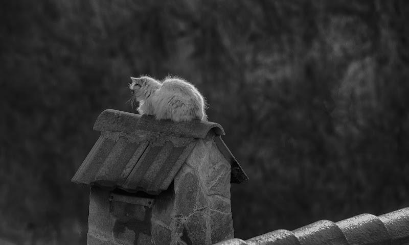Il gatto...sul tetto che scotta di Gianva