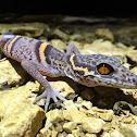 Chinesischer Leopard Gecko