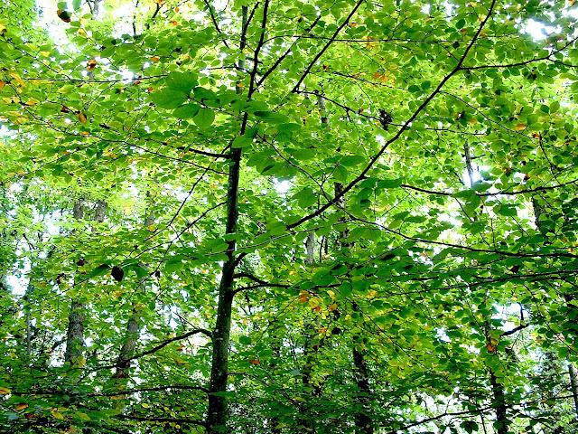 Ramas verdes de árbol