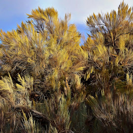 Large Sagebrush by Gaylord Mink - Nature Up Close Other plants ( sky, hillside, plants, sagebrush )
