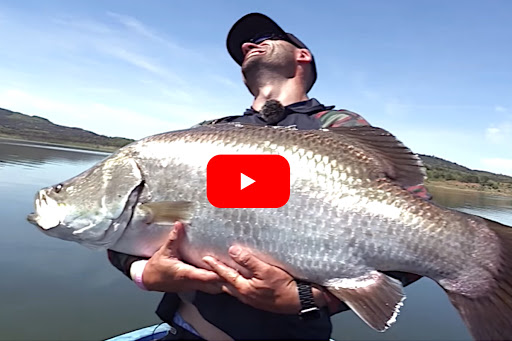 Massive Barramundi Gives Angler a Tough Challenge in Australia