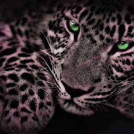Leonard-selective color  by Bruce Newman - Digital Art Animals ( selective color, nature, animal, black and white,  )