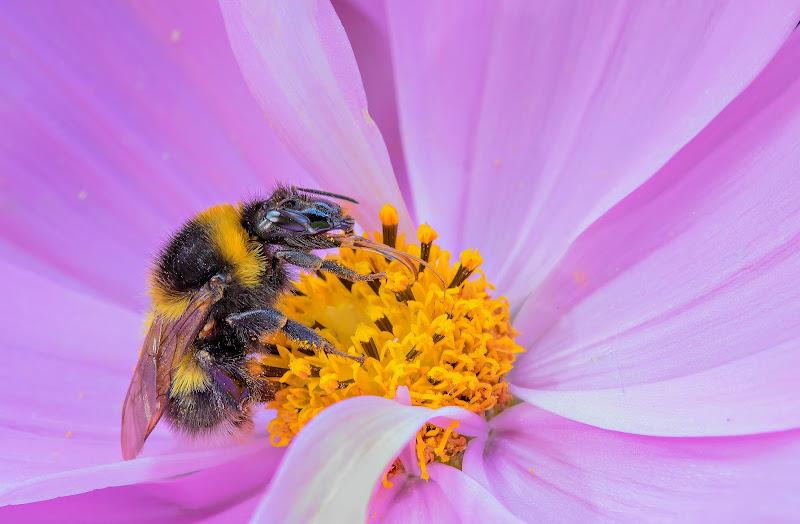 Polline di primavera di miglius57